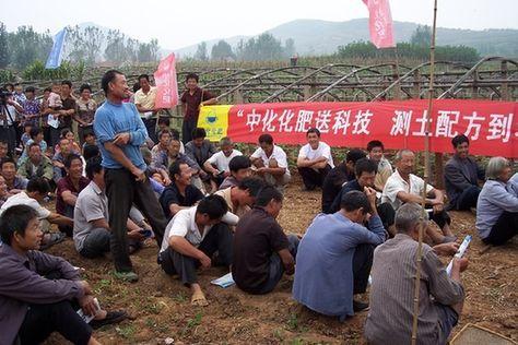 中化集团创新生产模式:让农民得实惠