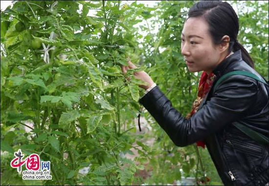 四川广安:前锋现代农业示范园 农旅结合成样板