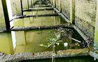 东江废弃的码头,大物聚集之地,中了一条大鱼,两人合力才搞上来