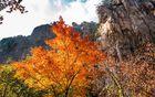 中国这座海滨老城秋日简直美哭,正适合秋日小住!