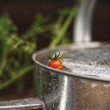 关你西红柿
