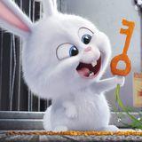醉酒的兔兔