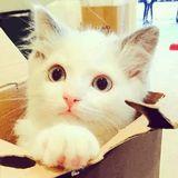 猫咪爱上喵星人
