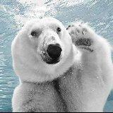 熊哥爱篮球