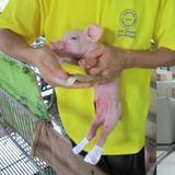 养猪职业经理人
